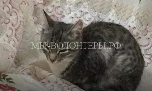 В поисках дома котенок забрёл в отделение полиции и попал в семью
