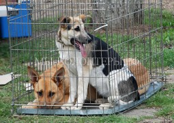 В Крыму отловом и стерилизацией собак впервые займутся зоозащитники