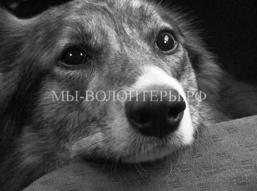 Мифы и предрассудки о бездомных собаках