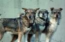 В Магаданской области впервые будет создана сеть государственных приютов для бездомных животных