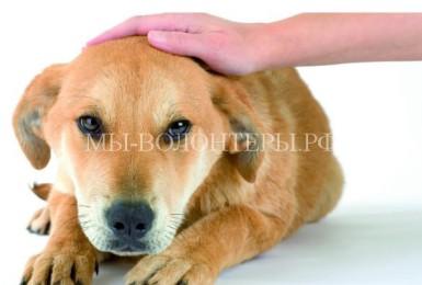 Чем опасно межсезонье для здоровья собак