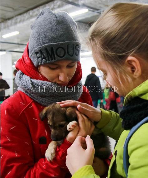 """""""Друзей выбирают!"""" - выставка-раздача бездомных животных в Петрозаводске"""