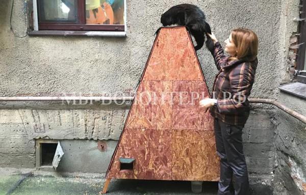 В Санкт-Петербурге во дворах планируется устанавливать домики для бездомных кошек