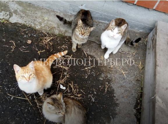 Кошки второй месяц ждут у дома своих хозяев, погибших в ДТП