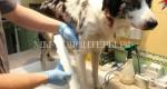 В нижегородском приюте животным ставят ортезы, напечатанные на 3D-принтере