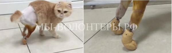 В Новосибирске создали уникальные протезы для кошки