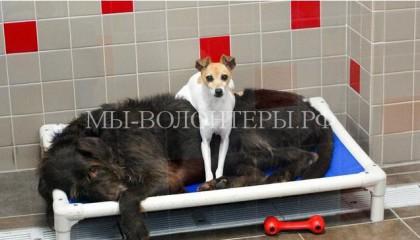 Когда-то у этих собак был общий дом, но и в приюте они остаются неразлучны