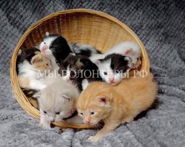 Спасение новорожденных котят из мусорного контейнера