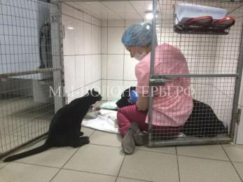 Сотрудница ветклиники спасла котенка и теперь он работает вместе с ней
