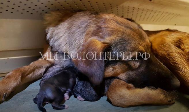 В вагоне метро на Кольцевой линии появились на свет сразу 10 новорожденных щенков