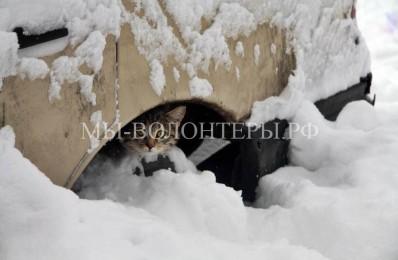 Как бездомным кошкам пережить холода