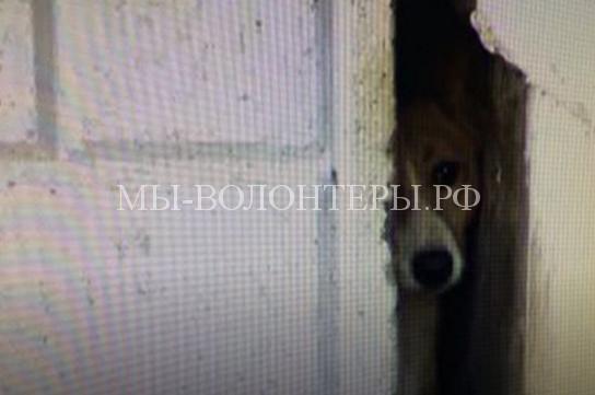 Еще щенком кто-то забросил её в небольшое отверстие между домами, и с тех пор собака не может выбраться наружу
