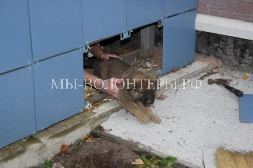 Сотрудник МЧС спас щенка и пристроил его в пожарную часть