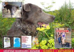 Циничные махинации с собакой приюта - судимая Челкина Н.В, Мартьянова И.М. и др.
