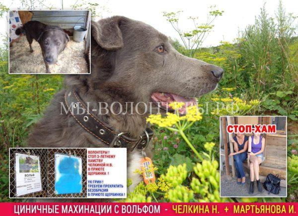 Циничные махинации с собакой приюта — судимая Челкина Н.В, Мартьянова И.М. и др.