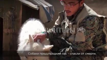 Солдат Сирийской Армии спасает животных из зоны боевых действий