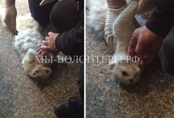 Врач спас кошку, задавленную вращающейся дверью, реанимировал ее и забрал домой