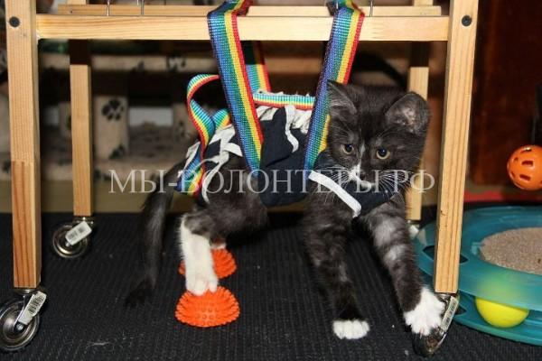 Котенок, изувеченный подростками-живодерами, учится ходить