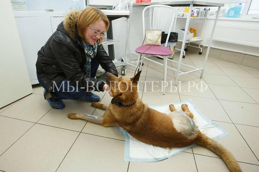 Жительница Петербурга спасла собаку, сбитую машиной и брошенную у дороги