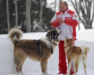 Президент России Владимир Путин поставил вопрос о цивилизованном порядке обращения с бездомными животными