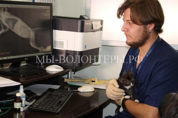 Котенок, изувеченный подростками-живодерами, останется инвалидом. Общественность требует найти и наказать малолетних изуверов