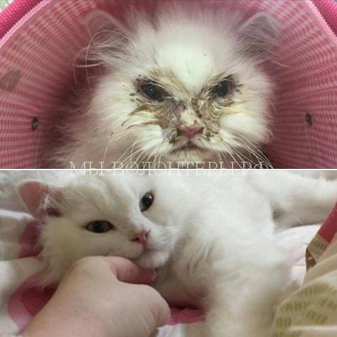 Дом и любящая семья спасли кота Сноу