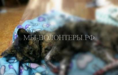 За жизнь кошки, спасшей чужих котят при аварии, борются ветеринары в Астане