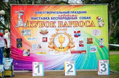 В Сочи состоится выставка-пристройство «Кубок Барбоса»