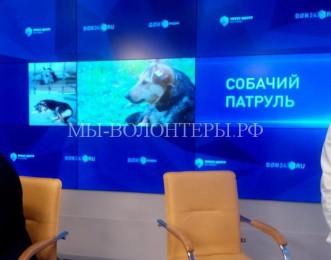 В Ростове-на-Догу предложили создать центр льготной стерилизации собак «Собачий патруль»