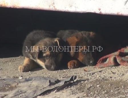 Участковый в Омске спас 4 щенков, застрявших между гаражами