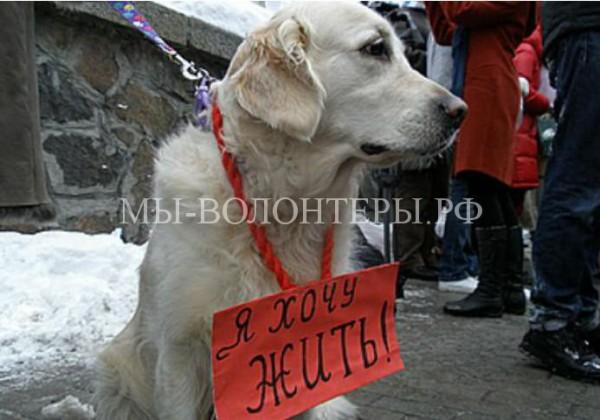 Суд запретил властям Анапы незаконно убивать бездомных животных