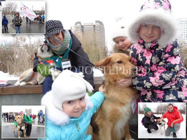 Успешно прошла выставка «Собака-согревака» приютов Щербинка, Красная Сосна и Бирюлево