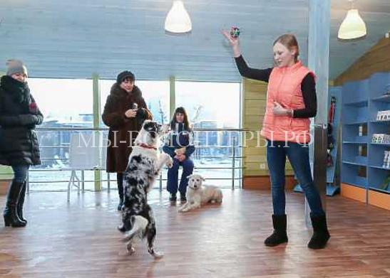 В Нижнем Новгороде открылся приют для бездомных животных