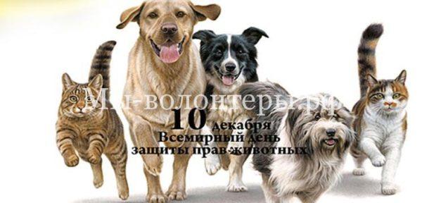 10 декабря — Всемирный день прав животных