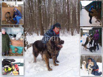 Один морозный день из жизни волонтеров приюта Щербинка, декабрь 2016