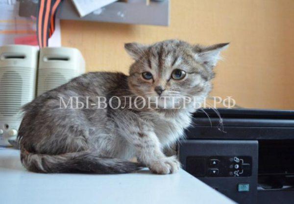 Житель Новосибирска спас на дороге замерзшего котенка и нашел ему семью