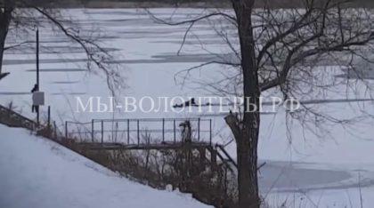 Житель Энгельса спас трех бездомных собак, провалившихся под лед
