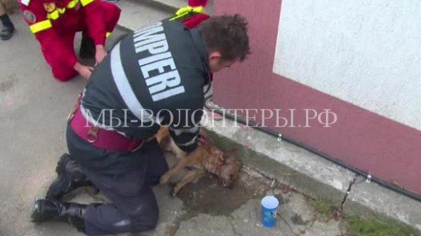 Пожарный сделал собаке искусственное дыхание, чтобы спасти ей жизнь