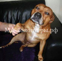 Британца приговорили к тюремному заключению за избиение собаки