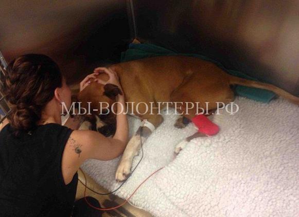 Собака защитила свою маленькую хозяйку от змеи, став жертвой ядовитой рептилии