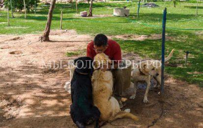 «Собачий папа» и его 735 собак