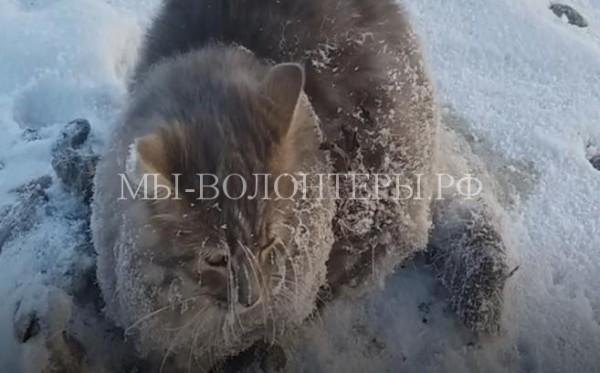 Спасение кота с вмерзшими в лед лапами