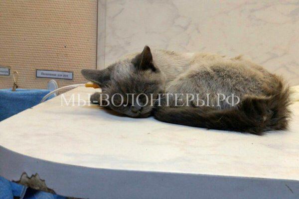 Спасение кошки, застрявшей в вентиляционной шахте