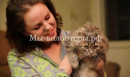 Кот Семен, спасенный из ледяного плена, обрел дом