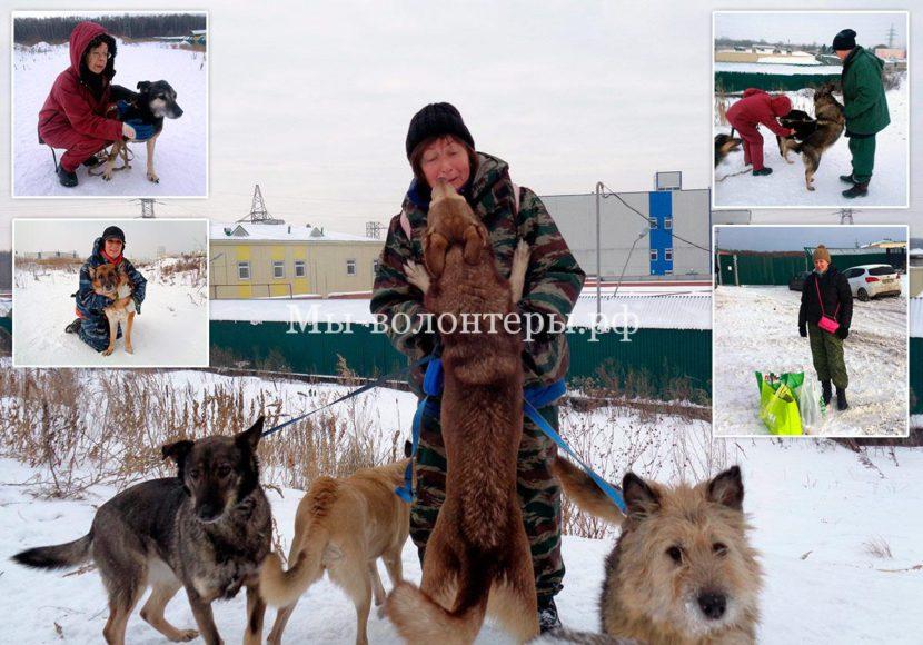 Зимние будни и выгул собак приюта Щербинка волонтерами-кураторами