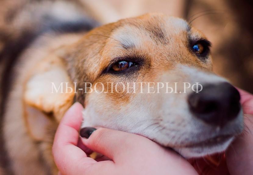 Законопроект о создании института уполномоченного по правам животных в России