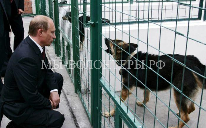 Президент РФ Владимир Путин на большой ежегодной пресс-конференции заявил, что поддержал бы ужесточение наказания за жестокое обращение с животными