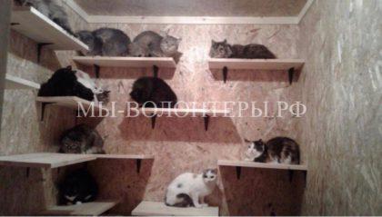 Волонтеры спасли 19 кошек, оставшихся в квартире после смерти хозяйки