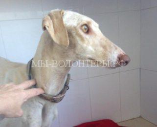История спасения бездомной собаки, которая из последних сил привела волонтеров к своим щенкам