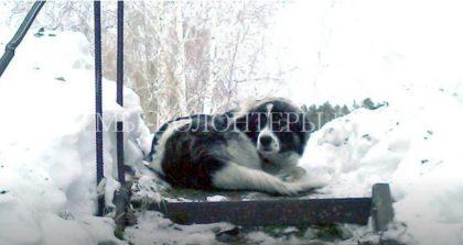 Неравнодушные люди нашлихозяев потерявшейся собаки. Пес неделю ждал хозяев на улице.